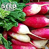 buy French Breakfast Radish Seeds - 200 Seeds NON-GMO now, new 2020-2019 bestseller, review and Photo, best price $1.95