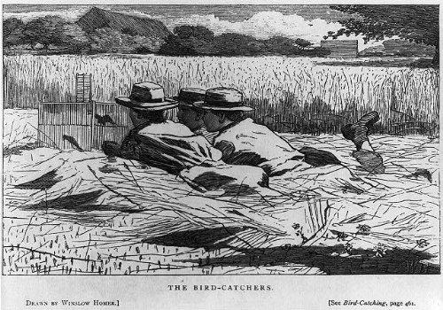 Photo: The Bird-Catchers,1867,bird-cage trap,wild birds,boys
