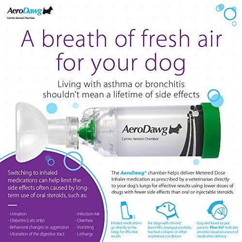 The 8 best inhalers for bronchitis