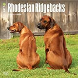 Rhodesian Ridgebacks Wall Calendar Dogs 2017 {jg} Best Holiday Gift Ideas - Great for mom, dad, sister, brother, grandparents, , grandchildren, grandma, gay, lgbtq.