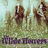 Wilde Flowers by WILDE FLOWERS