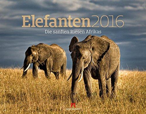 Elefanten 2016
