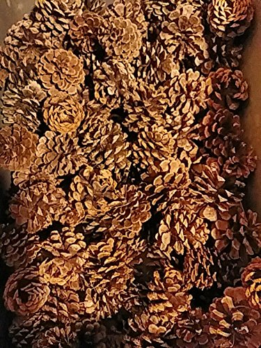 "100 Medium Ponderosa Pine Cones (3""- 4"") NewLifeEcycling Fall Winter Holiday, Home Decor, Vase Bowl Filler Displays Crafts …"