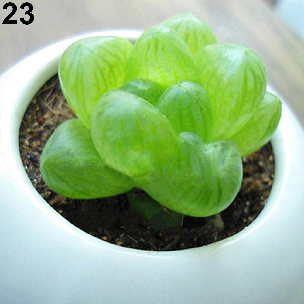 Centraliain 80pcs Semillas Suculentas Raras Plantas Suculentas Semillas Plantas Mini Jard/ín De Flores Hogar Patio Oficina 1# 60 Piezas