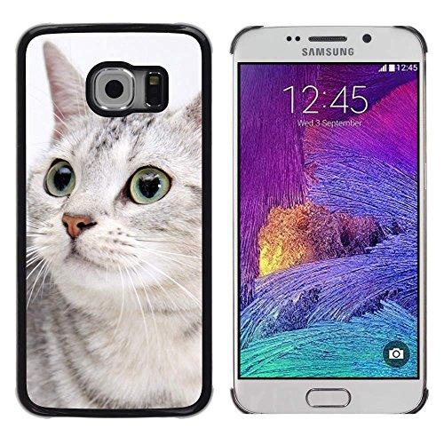 GIFT CHOICE / Slim Hard Protective Case SmartPhone Shell Cell Phone Cover for Samsung Galaxy S6 EDGE // Egyptian Mau Shorthair Grey Sokoke Cat (Ma Na Halloween)