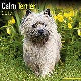 Cairn Terrier Calendar 2017 - Dog Breed Calendars - 2016 - 2017 wall calendars - 16 Month by Avonside