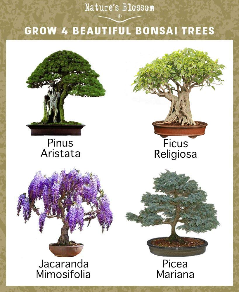 Natures Blossom Bonsai Garden Seed Starter Kit - Easily Grow 4 Types of Miniature Trees Indoors: A Complete Gardening Set Organic Seeds, Soil, Planting Pots, Plant Labels & Growing Guide. Unique Gift