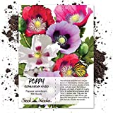 Seed Needs, Single Mixed Poppy (Papaver Somniferum) 500 Seeds