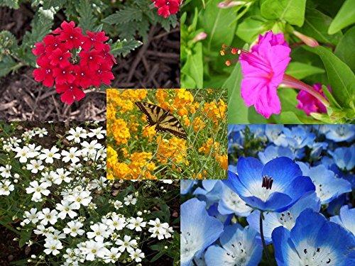 Florida & Gulf Coast Wildflower Mix (6400 thru 1LB seeds) Deep South Flowers! #22 (5) by nk_zel