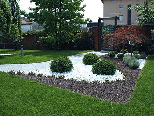 Giardino con sassi bianchi for Ciottoli bianchi
