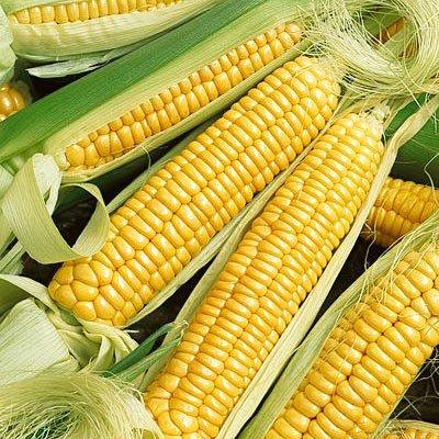 25 Golden Cross Bantam Corn Seeds