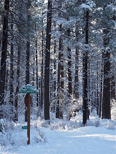 - Laeacco 4X5FT Vinyl Photography Background Winter Snow Forest Road Signs and Ponderosa Pine Trees Central Oregon Covered Fresh Snow Background Morning Light Peeks Personal Portrait Photo Backdrop