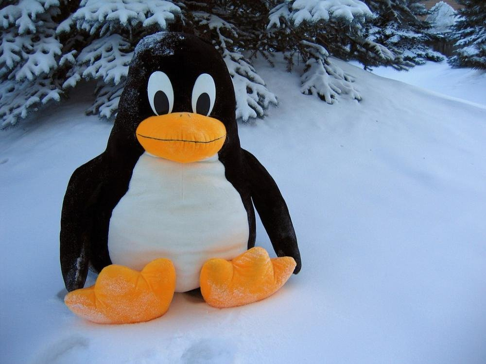 Amazon Com Laminated 32x24 Poster Linux Penguin Funny Snow Toy