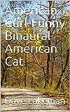 American Curl-Funny Binaural American Cat