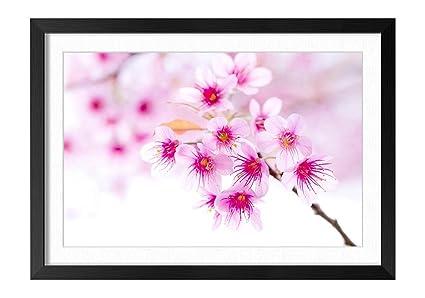 Amazon Cherry Blossom Pink Sakura Flower Black Frame Art Print