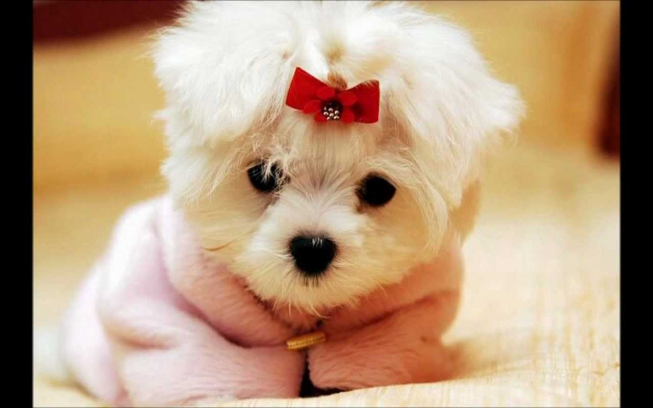 Puppies Live Wallpaper And Cutest Baby Dogs: Amazon.es