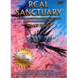 Hilary Stagg: Real Sanctuary