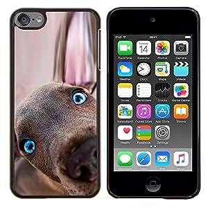 TECHCASE---Cubierta de la caja de protección para la piel dura ** Apple iPod Touch 6 6th Touch6 ** --Weimaraner del perrito del perro de Vizsla Redbone