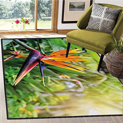 Plant, Bath Mats Carpet, Close up Image of Strelitzia Reginae Bird of Paradise Flower Madeira Island Portugal, Children Kids Nursery Rugs Floor Carpet 6x7 Ft Multicolor
