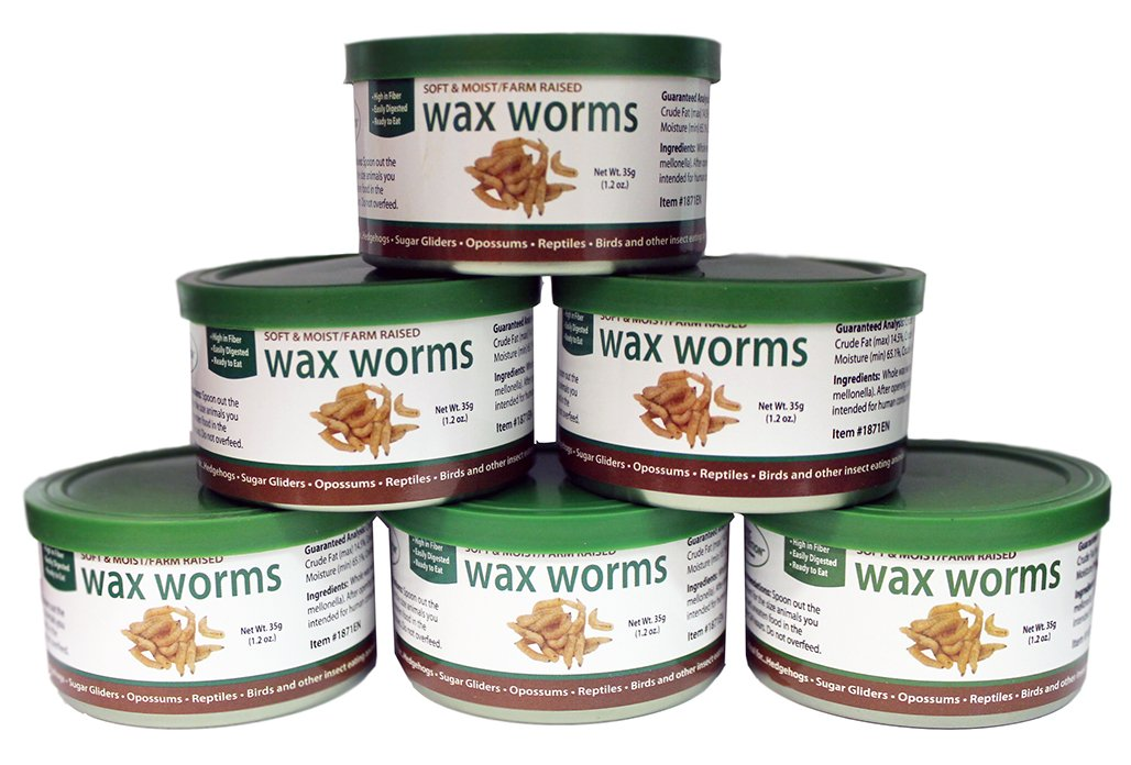 Canned Wax Worms (1.2 oz. 6 Pack) - Healthy High Protein Insect Treat - Hedgehogs, Sugar Gliders, Reptiles, Wild Birds, Chickens, Lizards, Bearded Dragons, Skunks, Opossums, Fish, Amphibians, Turtles by Exotic Nutrition