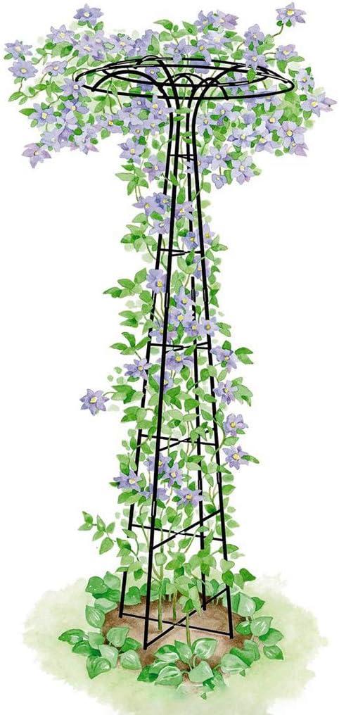En forma de paraguas, soporte de flores, enredadera, enredadera de ...
