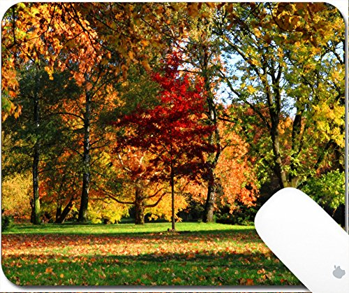 Luxlady Natural Rubber Gaming Mousepads autumnal park in the october as natural landscape 9.25in X 7.25in IMAGE: 26133609