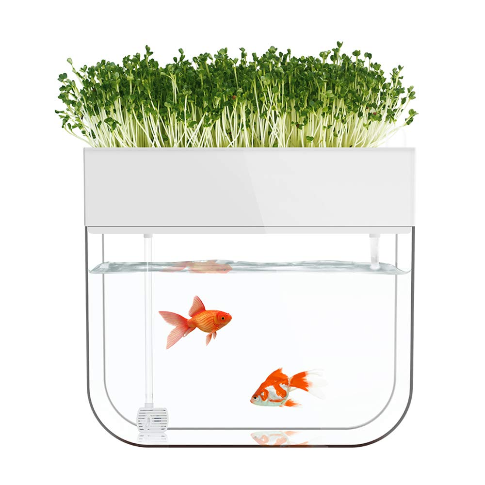 AMZ BCS Aquaponic Water Garden Fish Tank, Cube Aquarium Starter Kit,for Home Desk Bar Window Sill Restaurant Decor