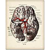 Brain Diagram With Veins - 11x14 Unframed Art Print - Great Gift for Medical and Nursing Students