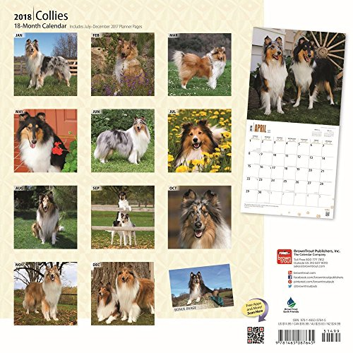 Collies 2018 Wall Calendar Photo #3