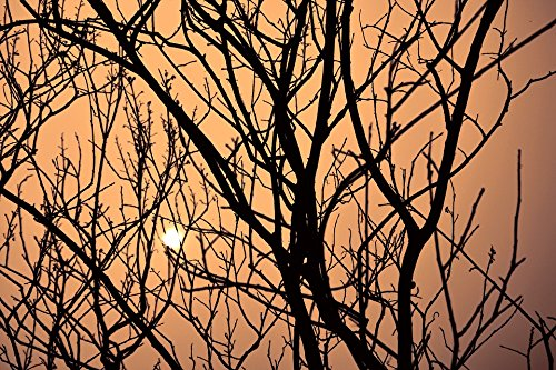 Home Comforts Peel-n-Stick Poster of Dusk Tree Messy Branches Sunset by Sunshine Poster 24x16 Adhesive Sticker Poster Print