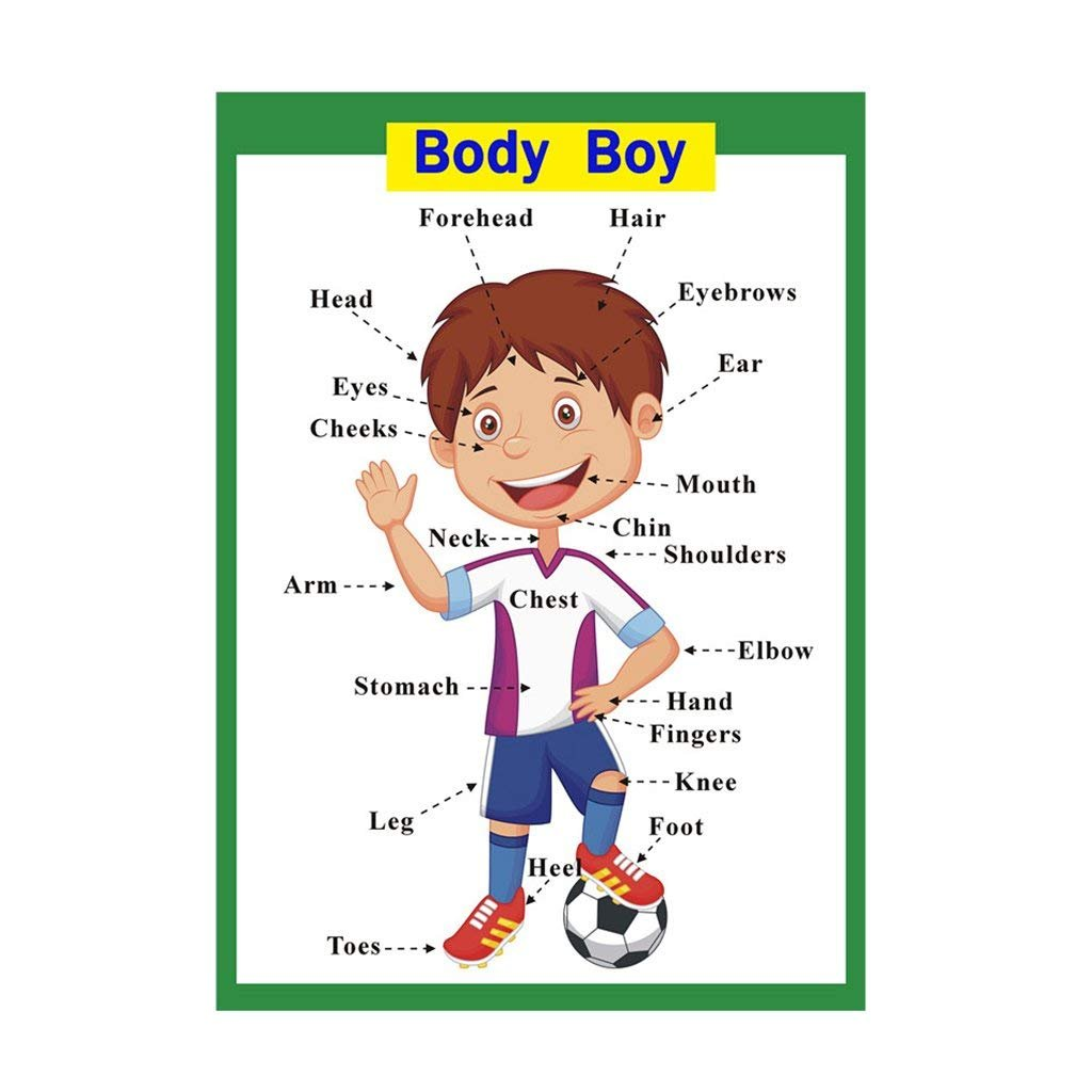 SANCENT Educational Preschool Posters for Kindergarten Body Boy Wall Charts For Toddlers Classroom Decorations Organization Learning Posters For Kindergarten -17x24in