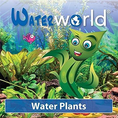 Waterworld - Peces en una botella de - agua Planta con 2 de liche peces: Amazon.es: Hogar