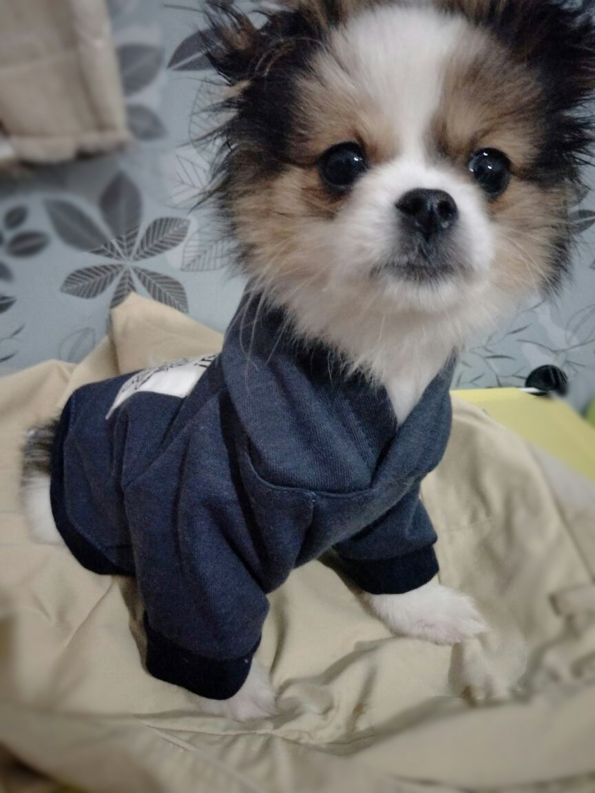 DroolingDog Dog Hoodie Pet Dog Coat Warm Sweatshirt Puppy Clothes for Small Dogs Boy Dog T Shirt, Small, Blue by DroolingDog (Image #3)