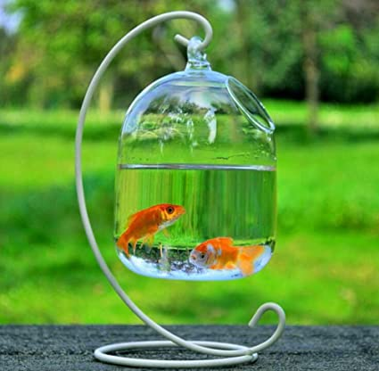 smart sisi Hanging Glass Fish Tank Transparent Spherical Fish Bowl Creative Fishbowl Vases(Include The