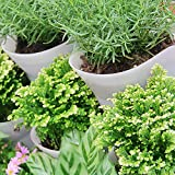 Worth Garden SELF Watering Vertical Wall Hangers
