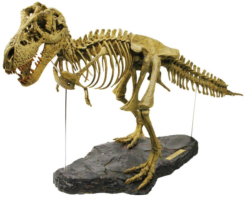 Geoworld CL066K Tirannosaurus Rex - Puzzle de esqueleto de ...