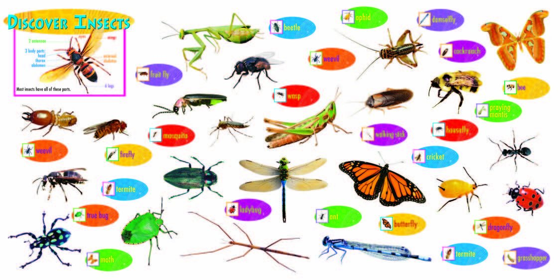 insects bulletin board set for teacher classroom set