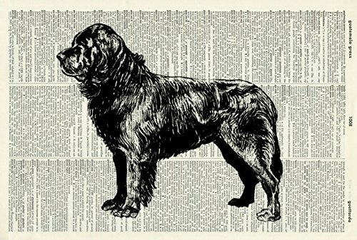 NEWFOUNDLAND DOG - VINTAGE ART PRINT - Vintage Dictionary Art Print - DOG ART PRINT - Illustration - Picture - Wall Hanging - Home Décor - Housewares - Book Print - Wall Art 68D