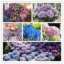 Promotion! Hot sale Hydrangea 300PCS Mixed Hydrangea Seeds Flowers Garden Plant Bonsai Viburnum macrocephalum Fort