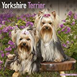 Yorkshire Terrier Calendar - Dog Breed Calendars - 2017 - 2018 wall Calendars - 16 Month by Avonside