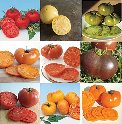 David's Garden Seeds Collection Set Tomato Indeterminate Rainbow of Colors PSL4050 10 Varieties (Multi) 500 Organic Heirloom Seeds (Indeterminate Tomato Plants)