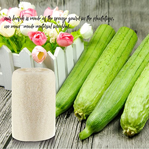 MAYMII·HOME 100% NATURE 6 Pack of (approx 4-5'' length) Organic Loofahs Loofah Spa Exfoliating Scrubber natural Luffa Body Wash Sponge Remove Dead Skin Made Soap by MAYMII·HOME (Image #5)