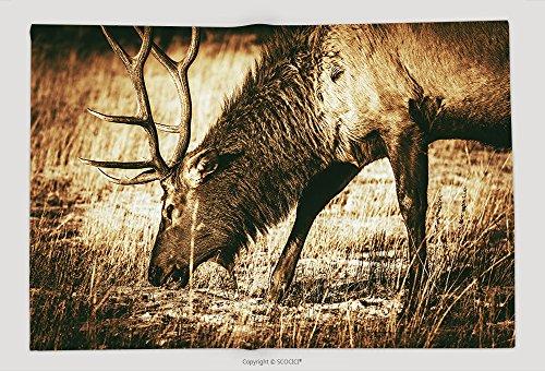 Supersoft Fleece Throw Blanket Adult North American Elk Closeup Colorado Wildlife Brown Vintage Color Grading 262869068