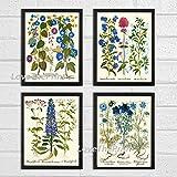 Botanical Print Set of 4 Antique Beautiful Blue Pink Iris Blue Bells Valerian Plants Garden Nature Wildflowers Flowers Home Room Decor Wall Art Unframed BES