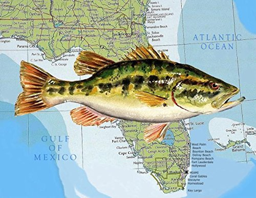 Freshwater Map - Florida State Freshwater Fish Largemouth Bass Watercolor on 8.5 X 11 Map Art print for the Fisherman Cottage and Lake house décor by Barry Singer