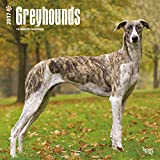 Greyhounds Dogs Wall Calendar Grey Hound 2017 {jg} Best Holiday Gift Ideas - Great for mom, dad, sister, brother, grandparents, , grandchildren, grandma, gay, lgbtq.