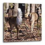 Lee Hiller Photography Lake Catherine State Park Wildlife – Two White Tail Deer – 15×15 Wall Clock (dpp_14003_3) For Sale