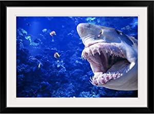 GREATBIGCANVAS Large Shark with Jaws Open Attempting to Catch and eat Fish Black Framed Wall Art Print24 x16 x1