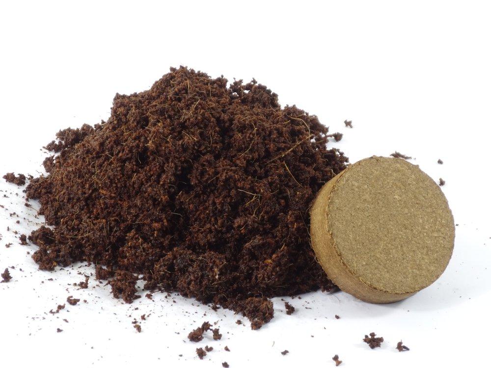 Heilpflanzen Hippophae rhamnoides Sanddorn Mit Substrat SAFLAX 40 Samen