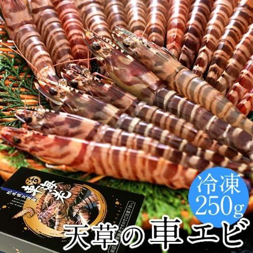 活〆冷凍 車海老 車えび 250g[8~12尾]熊本県天草産 維和島 急速冷凍 加工場直送 刺身 新鮮 クルマエビ
